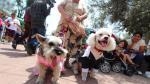 Ley contra el maltrato animal: Se reunieron 80,000 firmas para iniciativa - Noticias de animales domésticos