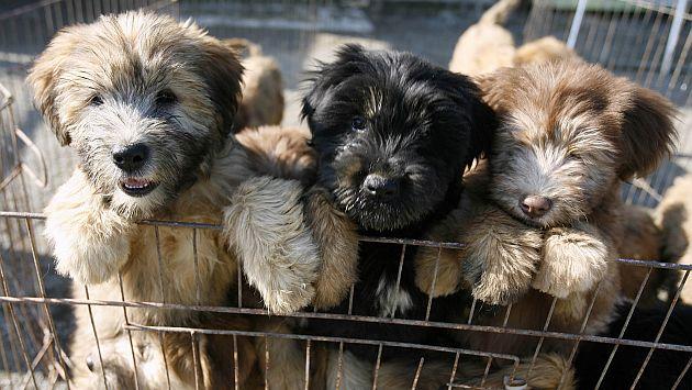 Congreso debatirá ley contra el maltrato animal propuesta por Carlos Bruce este 23 de abril. (USI)