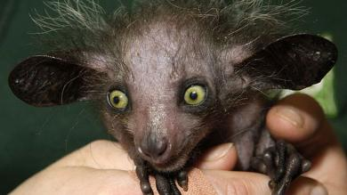 Día Internacional de la Diversidad Biológica: 10 extraños animales que no sabías que existen