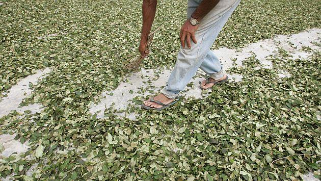 Erradicación mejora, pero productores fabrican más con menos materia prima.