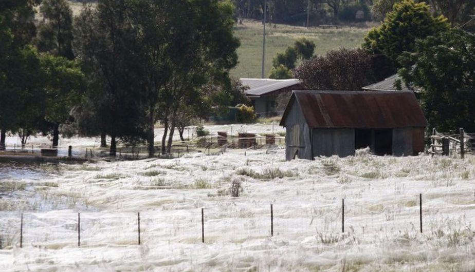 Así quedó la localidad de Goulburn por lluvia de arañas en Australia. (Reuters)