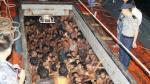 Birmania inició rescate de inmigrantes, pero aún hay miles en el mar
