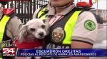 Policía Nacional lanzó Escuadrón Orejitas para rescatar a animales abandonados