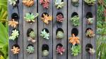 Siembra plantas suculentas y dale un nuevo aspecto a tu jardín