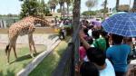 Parque de las Leyendas: ¿Animales reciben o no una adecuada alimentación? - Noticias de lobos marinos