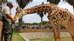 Parque de las Leyendas: Documentos internos confirman sacrificio de animales - Noticias de animales domésticos