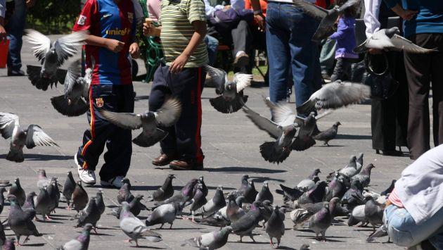 Sancionarán a vecinos de La Punta que alimenten a palomas. (Perú21)