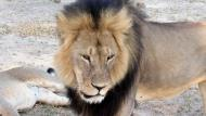 Zimbabuenses Theo Bronkhorst y Honest Trymore Ndlovu, cómplices del asesinato de Cecil, comparecerán este miércoles ante la justicia. (AP)