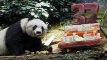 China, Oso panda