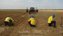 El campo es el futuro: Una mirada a cuatro carreras vinculadas a la agricultura y la ganadería