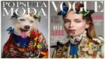 ¿Cómo serían las portadas de las grandes revistas de moda con perros de protagonistas? [Fotos] - Noticias de indigentes