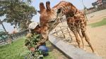 Zoológico de Huachipa fue elegido entre los 11 mejores de América Latina - Noticias de simon diaz