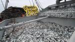 Produce dio inicio a ciclo de pesca de anchoveta - Noticias de resolución ministerial