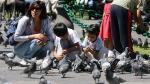 Barranco: Municipalidad multará con más de S/.700 a personas que alimenten a palomas. (USI)