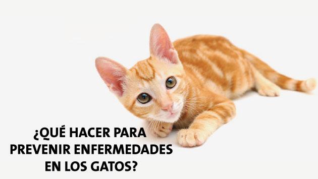 Conoce los cuidados básicos que debe recibir tu gato