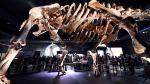Titanosaurio argentino es la nueva estrella del Museo Historia Natural de Nueva York [Fotos] - Noticias de nicolas cage