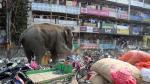 Elefante salvaje causó pánico en ciudad al destruir un centenar de casas y tiendas. (AFP)