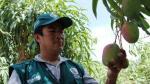 Minagri lanza Formagro para mejorar condiciones de los productores agropecuarios - Noticias de centro juvenil
