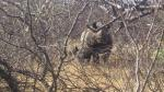 Leonardo DiCaprio viajó a la selva de Indonesia para apoyar a defensores de la naturaleza [Fotos] - Noticias de tigres de sumatra