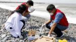 Se tomaron muestras de la arena y del agua. (Municipalidad del Callao)