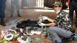 Tailandia: Hallan unos 40 tigres bebés congelados en el 'Templo del Tigre' [Fotos] - Noticias de mordedura de serpientes