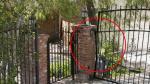 Anton Yelchin: Así quedó el lugar donde murió el actor [Fotos] - Noticias de john young