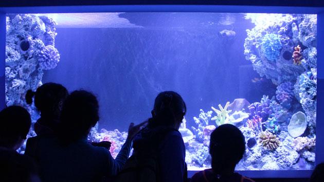 Inauguración del acuario del Zoológico de Huachipa será el 15 de julio. (USI)