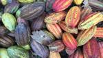 La ruta del cacao: la semilla que cambió la vida de muchos en Tarapoto [Video] - Noticias de hoja de vida