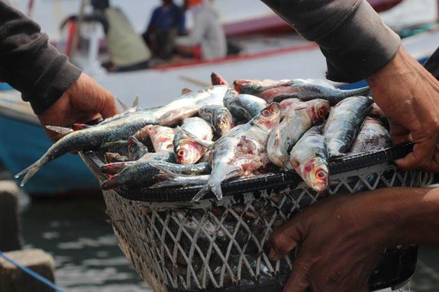 Produce: Consumo de pescado aumentó 28.5% en el período 2011-2015. (USI)