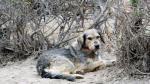 ¿Por qué se celebra hoy el Día del Perro? - Noticias de amanecer