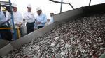 La anchoveta y anchoveta blanca quedan vetadas entre las 5 y 30 millas marinas de distancia a la costa. (USI)