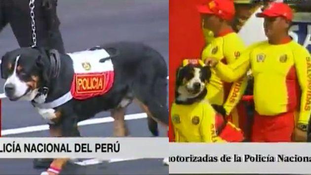 Mascotas del presidente desfilaron en la Parada Militar por Fiestas Patrias. (Captura)