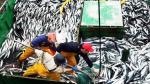 Ministerio de la Producción tomará medidas por calentamiento del mar - Noticias de pesca de anchoveta