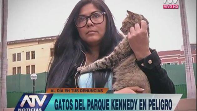 Al menos 40 gatos han desaparecido del Parque Kennedy, indicó la activista. (ATV Noticias)