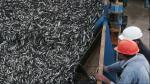 Perú es sexto productor de captura marina - Noticias de pesca de anchoveta