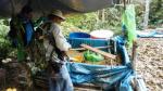 Vraem: Fuerzas Armadas interceptaron y destruyeron laboratorio de cocaína - Noticias de ccffaa