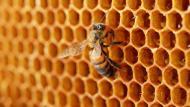 Es importante que cuente con un kit contra la picadura de abejas. (Depositphotos.com/belchonock)