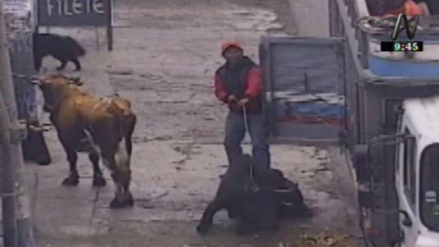 Animales eran maltartados con un palo con púas. (Captura)