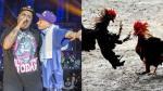 Batalla de los gallos: Confunden competencia de rap con una pelea de animales - Noticias de hip hop