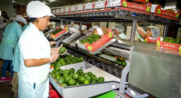 Valor de exportaciones de palta Hass creció 260%, informó Sierra y Selva Exportadora. (USI)