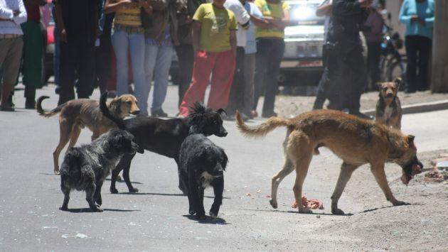 Se advirtió que se eliminarán a los perros callejeros. (Perú21)