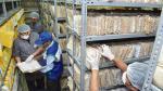 Depuran más de 25 toneladas de Tarjetas Andinas de Migración acumuladas en una década - Noticias de impresa