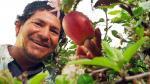 Anímese a incursionar en el amplio sector de los productos agrícolas - Noticias de