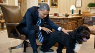 Sunny tiene 4 años de edad y es de raza portuguesa. (Pete Souza / The White House)
