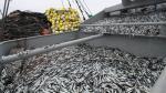 Gobierno utilizará drones y visores para combatir la pesca ilegal en el litoral peruano - Noticias de cinco millas