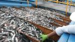 Exportaciones pesqueras cayeron 9%, aseguró ADEX - Noticias de industria extractiva