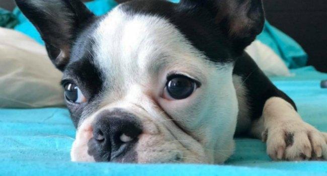 El 70% de los encuestados lleva a sus mascotas al veterinario.