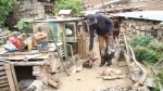 Perros callejeros matan a 35 pavos y cuyes en Arequipa - Noticias de edwin martinez