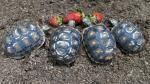 Mira estas tiernas crías que causan sensación en el zoológico de Singapur - Noticias de fauna silvestre