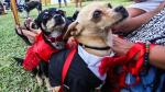 Empresa otorga una semana libre a sus empleados para que adopten un perro. (Referencial)
